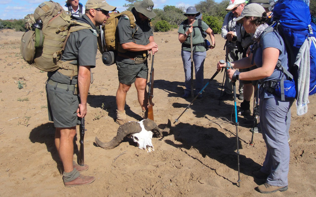 Discoveries on your walking Safari in Kruger National Park.