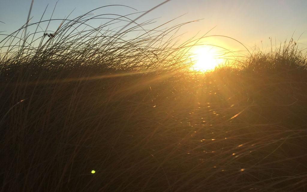 Grasses bend but don't break